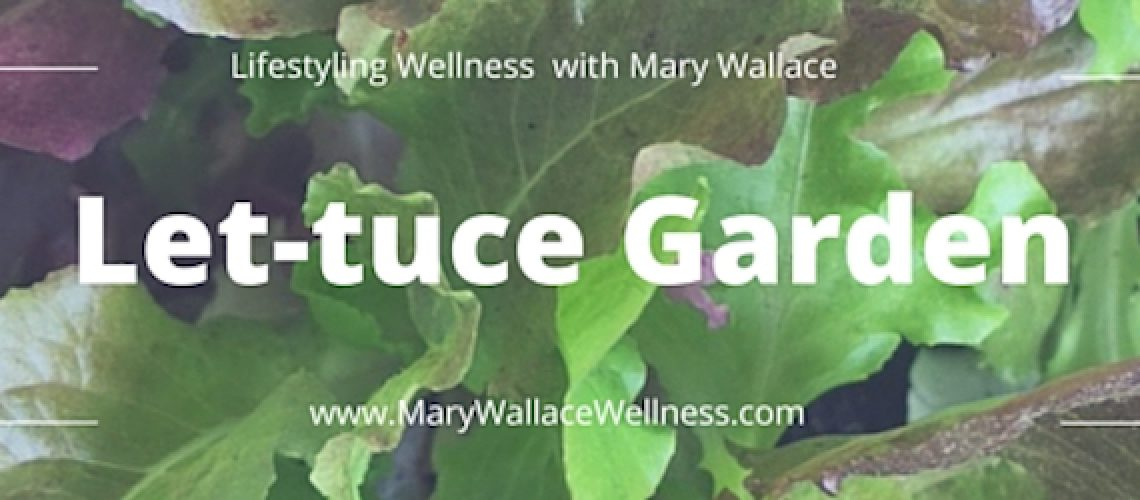 Let-tuce Garden Blog Header